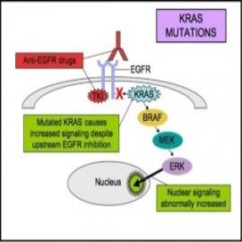 feat-kras-mutation-test-yj9JK8MF.jpg